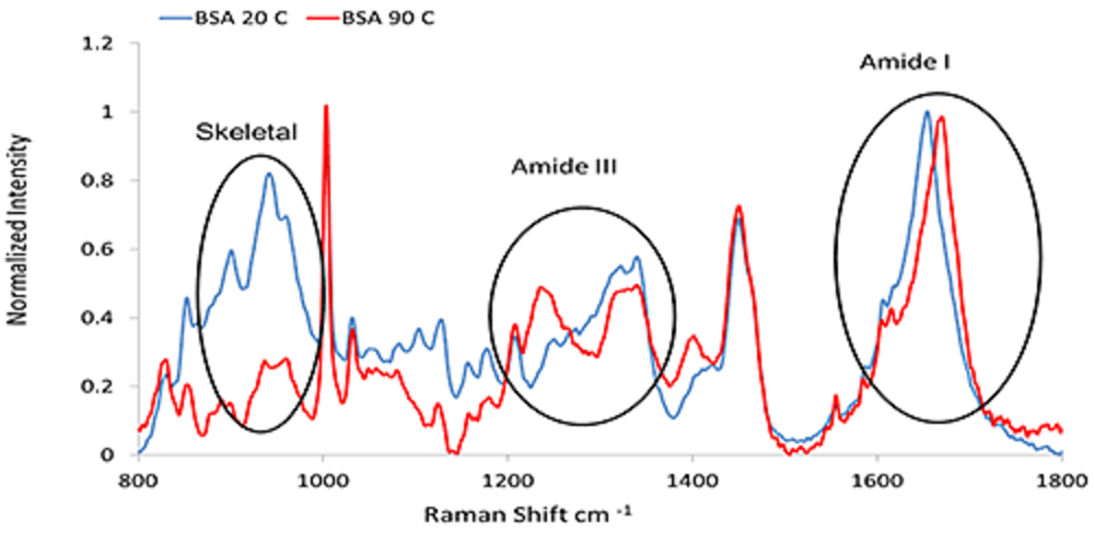 Using Raman Spectroscopy to Understand the Conformational Stability